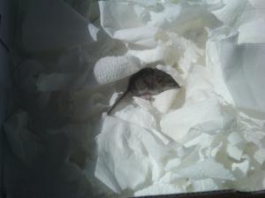 Mouse in a box